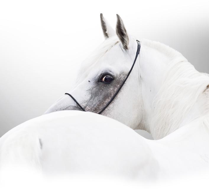 Hevonen - Method Putkisto lajistudio ratsastus ja Sanna Siekkinen - ratsastajan kehonhallintaa ratsastuskoulu Equstomissa, pääkaupunkiseudulla Nurmijärvellä